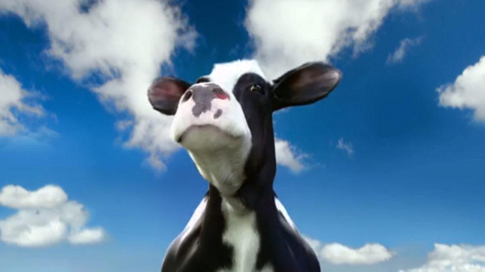 Vinamilk Bouncing Cows